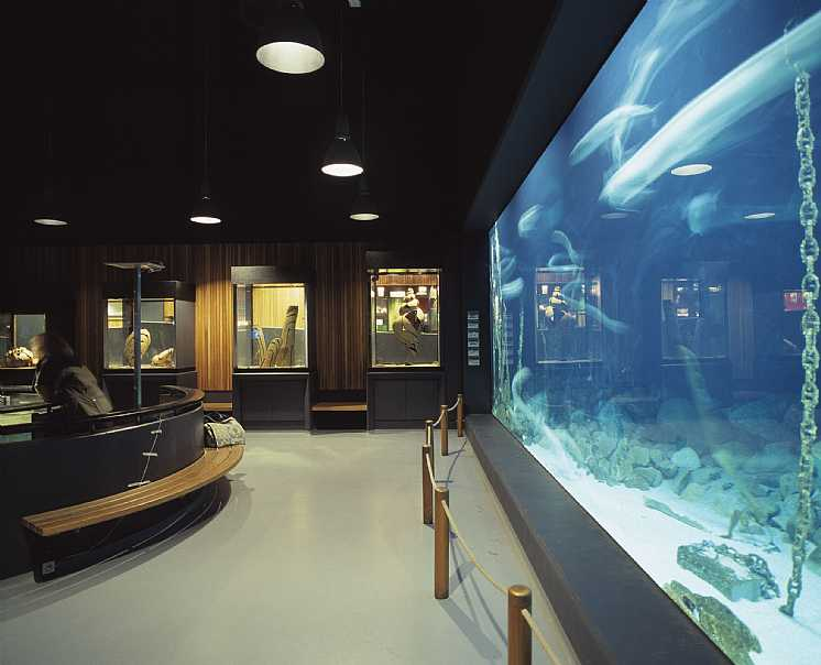 Shipping Museum Aquarium   : Fisheries and Maritime Museum, Esbjerg